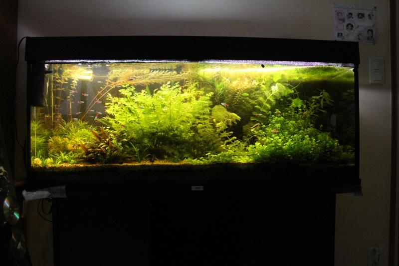 Présentation de mon aquarium (240L) Img_9811