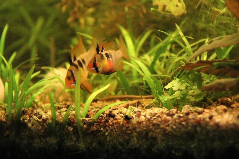 Présentation de mon aquarium (240L) Img_9814