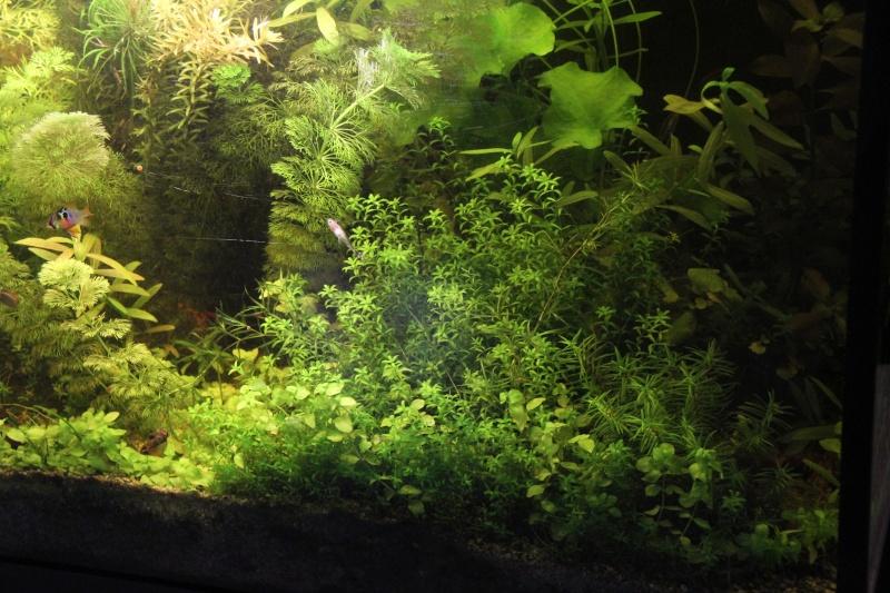 Présentation de mon aquarium (240L) Img_9816