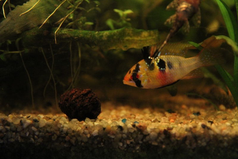 Présentation de mon aquarium (240L) Img_9818