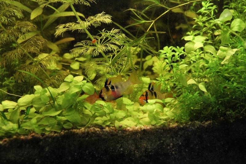 Présentation de mon aquarium (240L) Img_9819