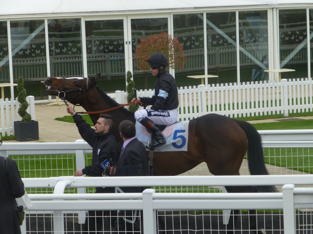 At the Races 02611
