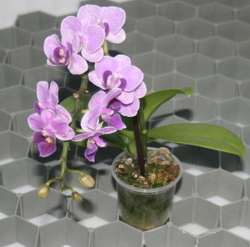 preiswerte Orchideenwanne Wann210