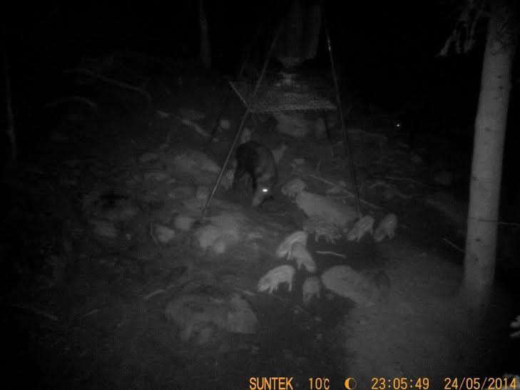 Sortie nocturne amphibiens Sangli10