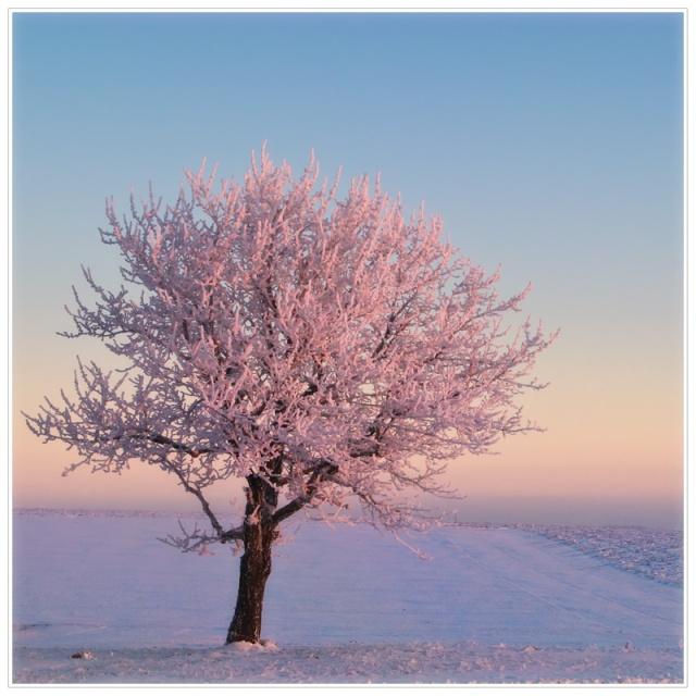hiver et neige Img_2110