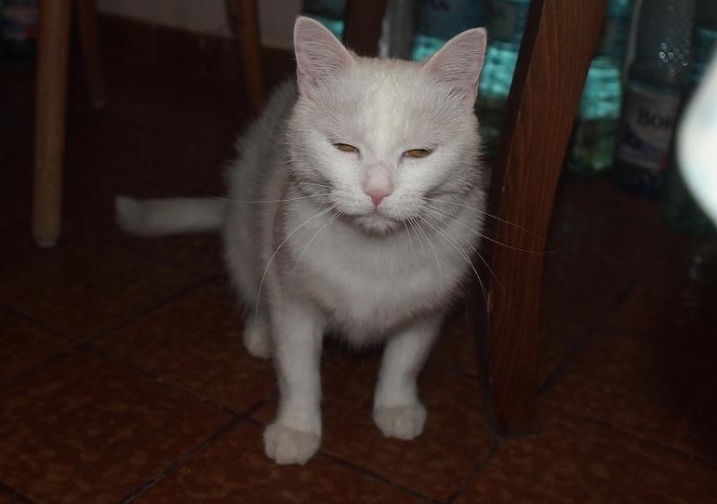 PRINCESSE, chatte née en 2010 env. (CARMINA) En FA chez Yas.h (Belgique) Prince11