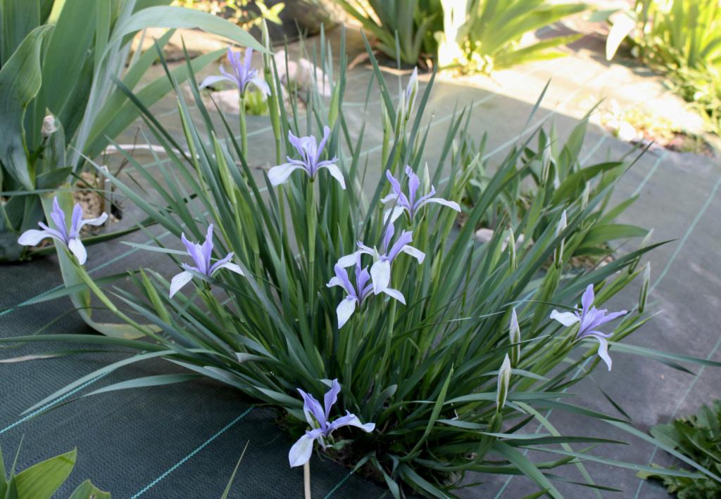 Identification Iris_l10