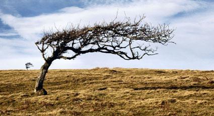 Une graine de vent (Image de Mai) Arbre_10