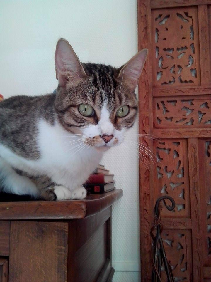 Esmeralda, tabby et blanc, née en octobre 2013 11178511