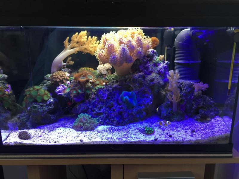 Un petit coin de récif (55litres) Img_2710