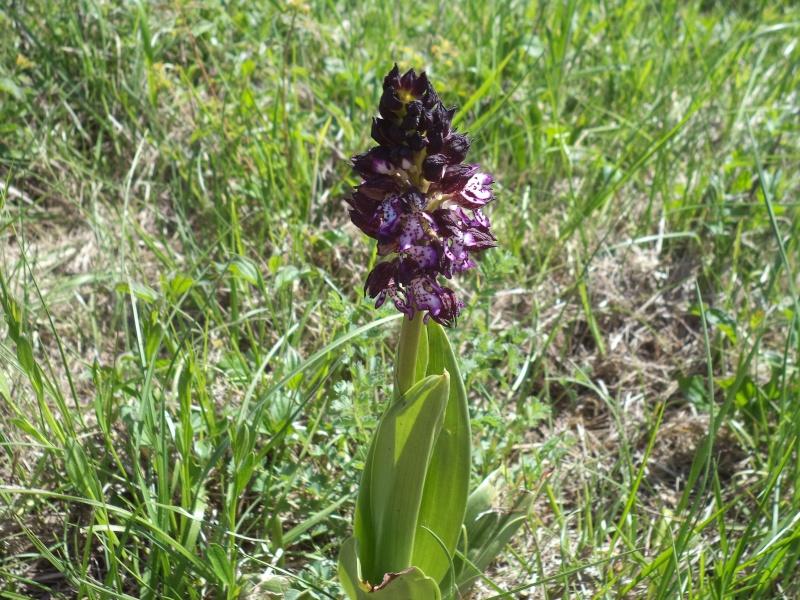 les orchidées du jour Dsc00751