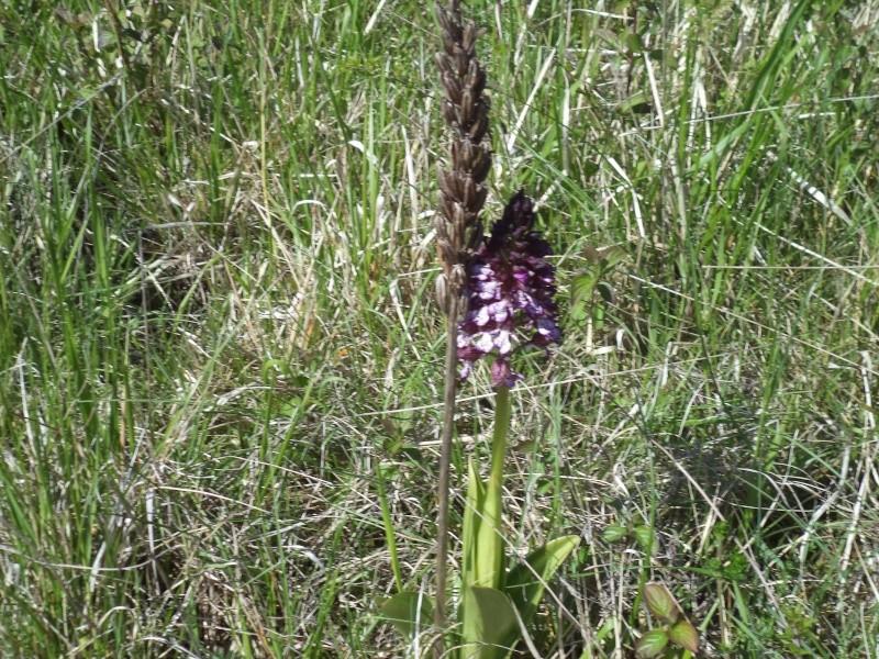 les orchidées du jour Dsc00753