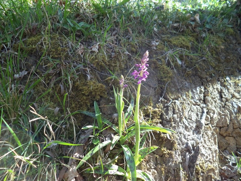 les orchidées du jour Dsc00810