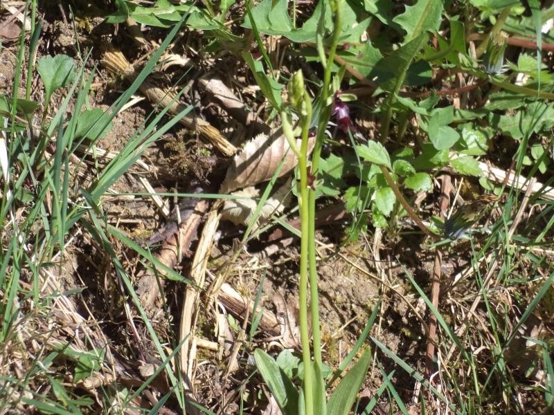 les orchidées du jour Dsc00813