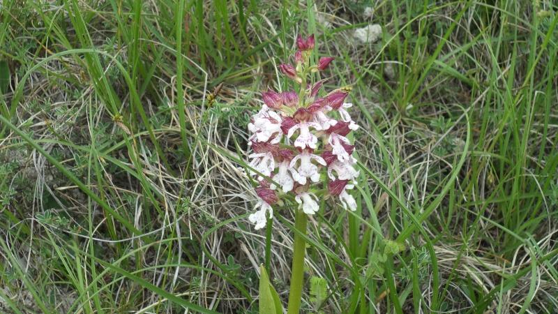 les orchidées du jour Dsc00821