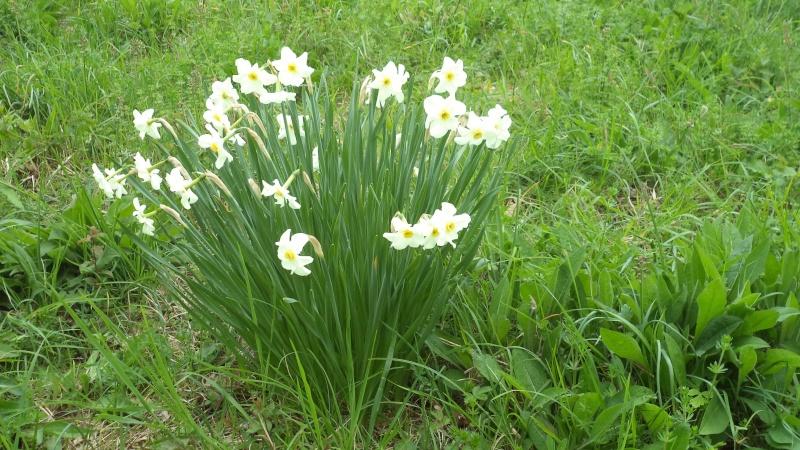les orchidées du jour Dsc00830