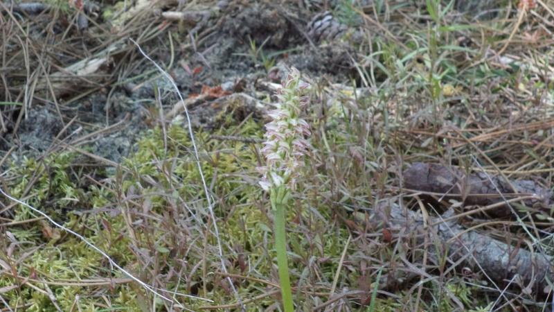 les orchidées du jour Dsc00910
