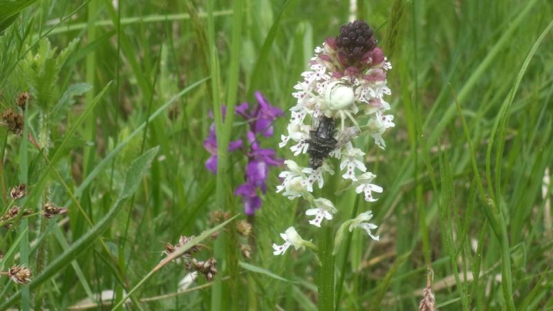 les orchidées du jour Dsc00913