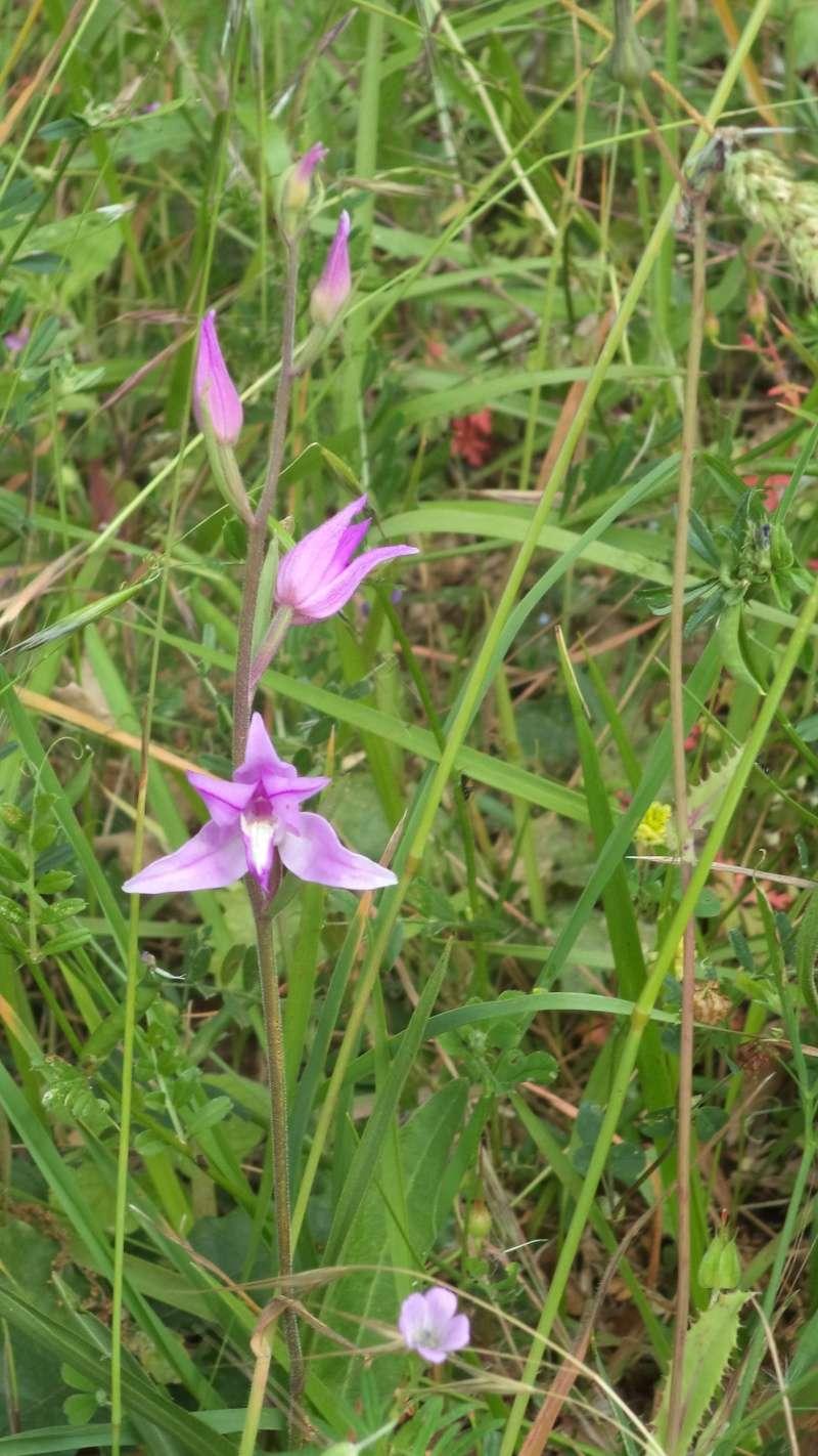 les orchidées du jour Dsc01110