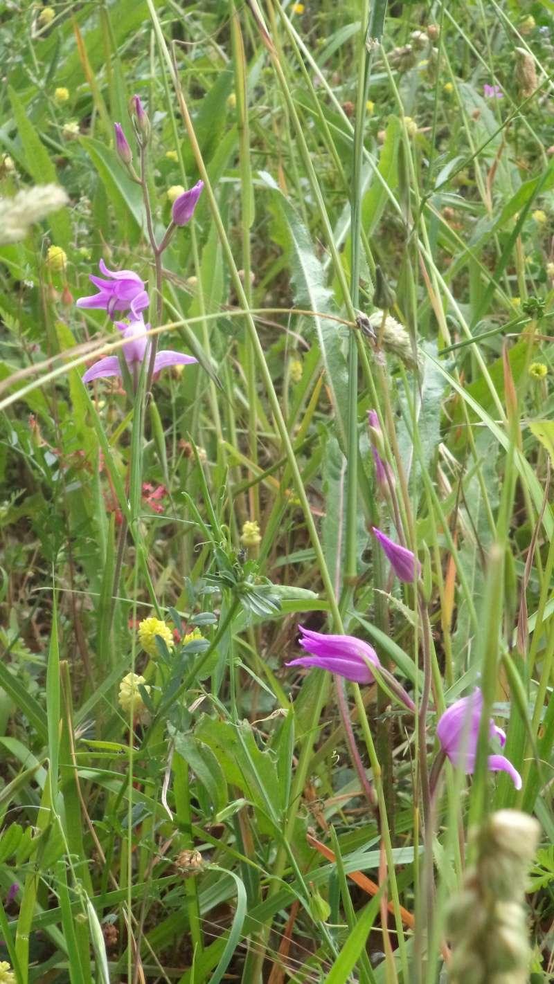 les orchidées du jour Dsc01111