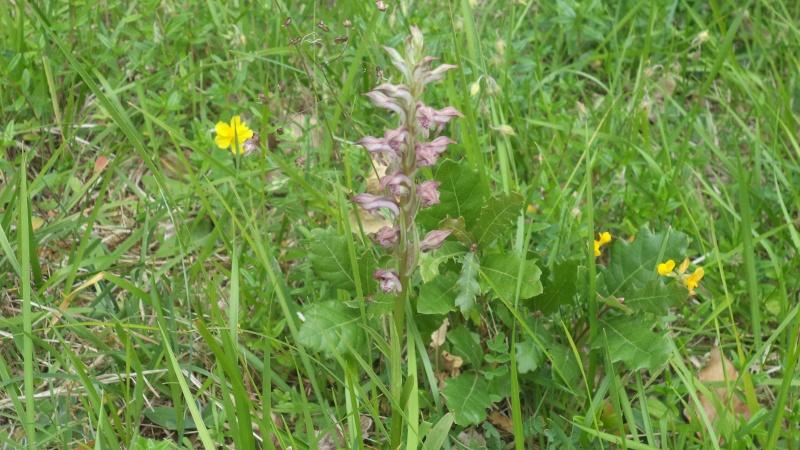les orchidées du jour Dsc01117