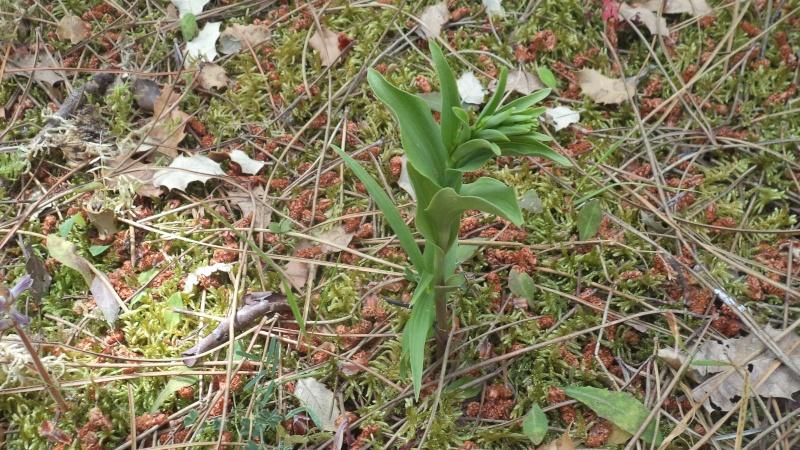 les orchidées du jour Dsc01120