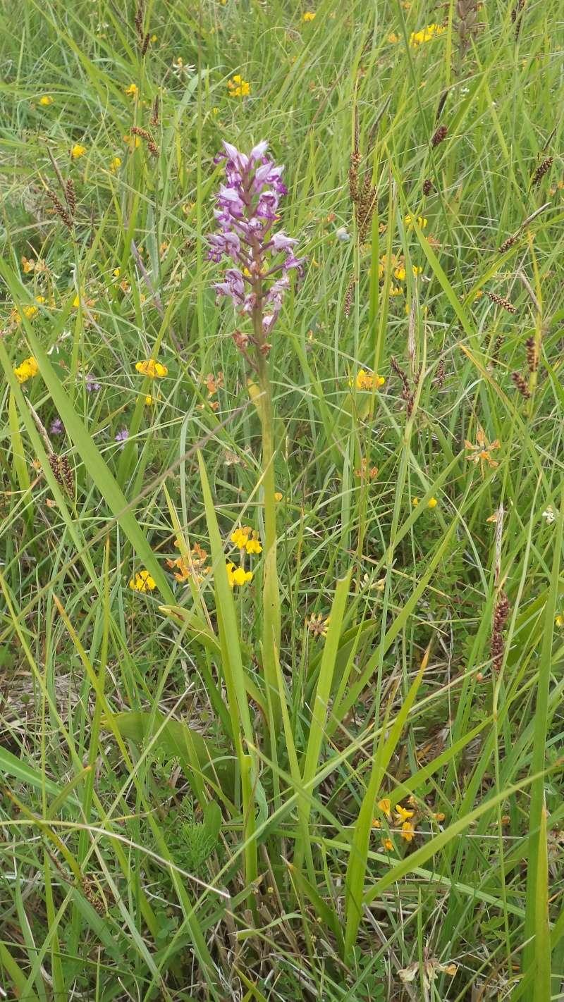 les orchidées du jour Dsc01121