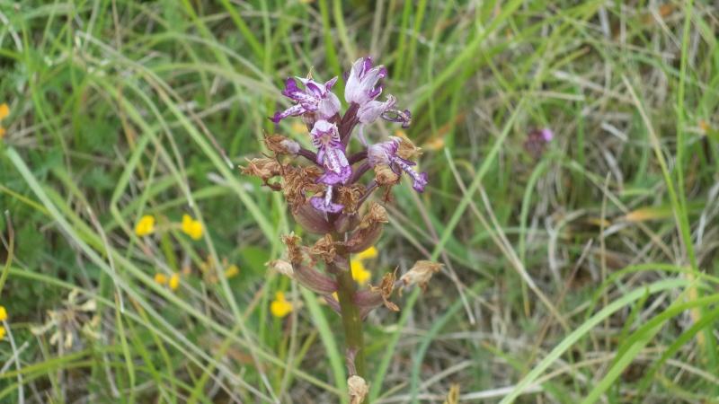 les orchidées du jour Dsc01122