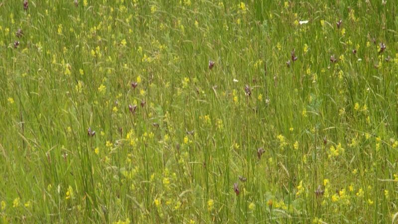 les orchidées du jour Dsc01124