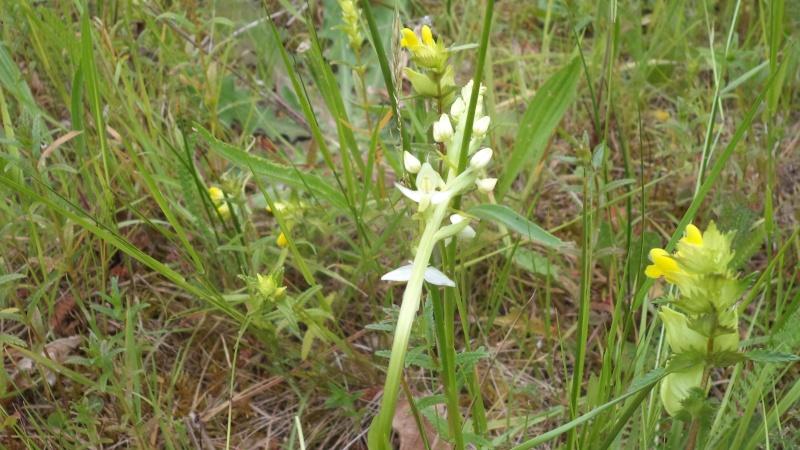 les orchidées du jour Dsc01129