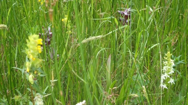les orchidées du jour Dsc01130