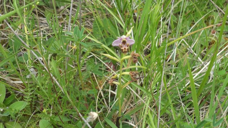 les orchidées du jour Dsc01135