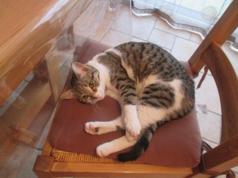 JOKE, chatonne tigrée et blanche, née début Mai 2014 Img_0910