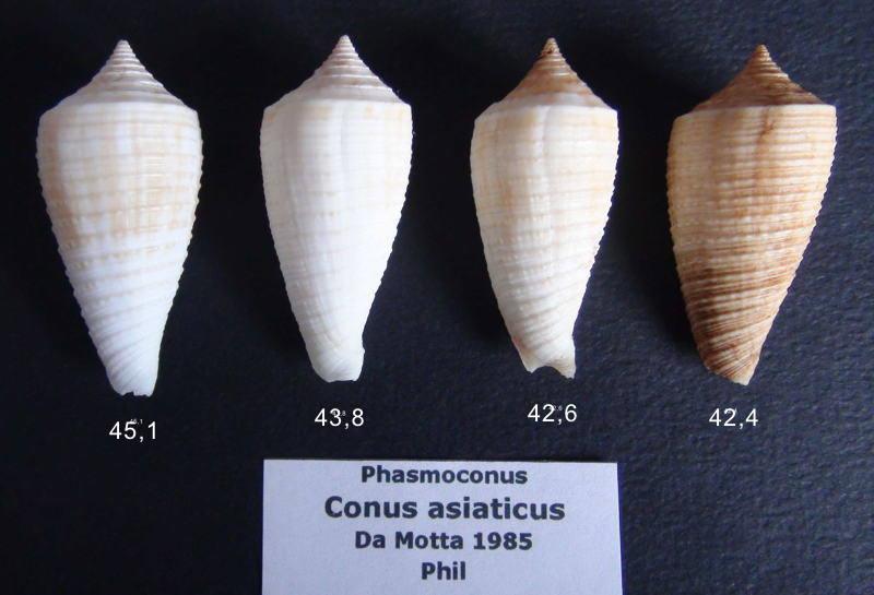 Conus (Phasmoconus) asiaticus   da Motta, 1985 - Page 2 Asiati10