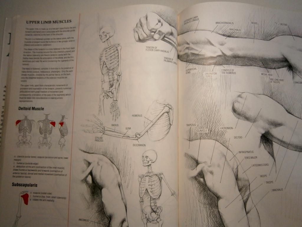 [bank] livres pour apprendre le dessin - Page 3 P5030010