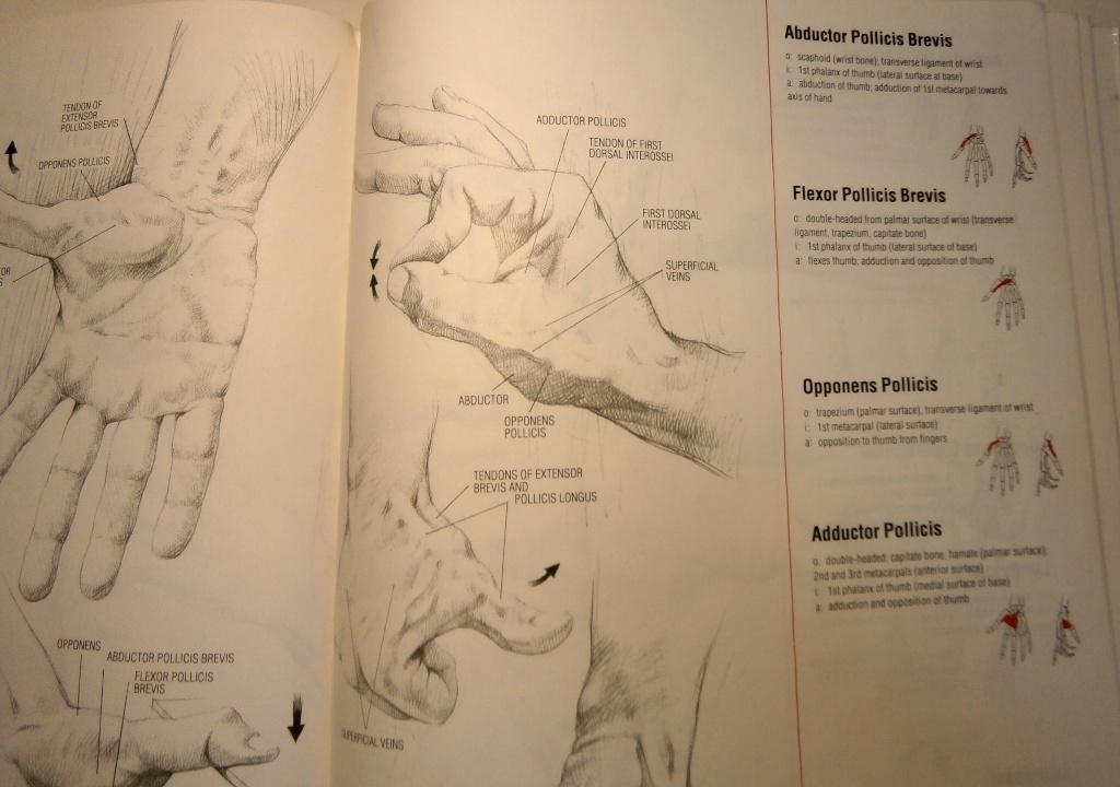 [bank] livres pour apprendre le dessin - Page 3 P5030011