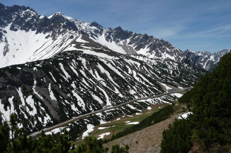 Bergfrühling: botantische Wanderung am Hahntennjoch/ Tirol P1310315
