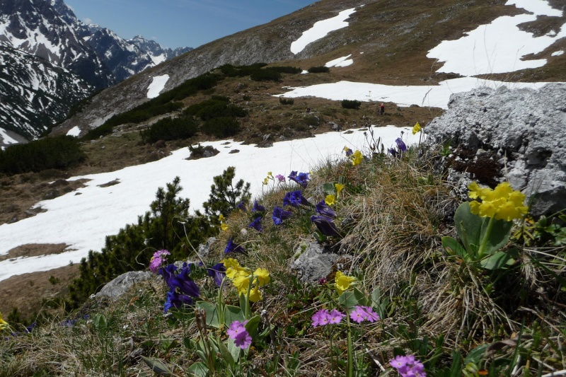 Bergfrühling: botantische Wanderung am Hahntennjoch/ Tirol P1310412