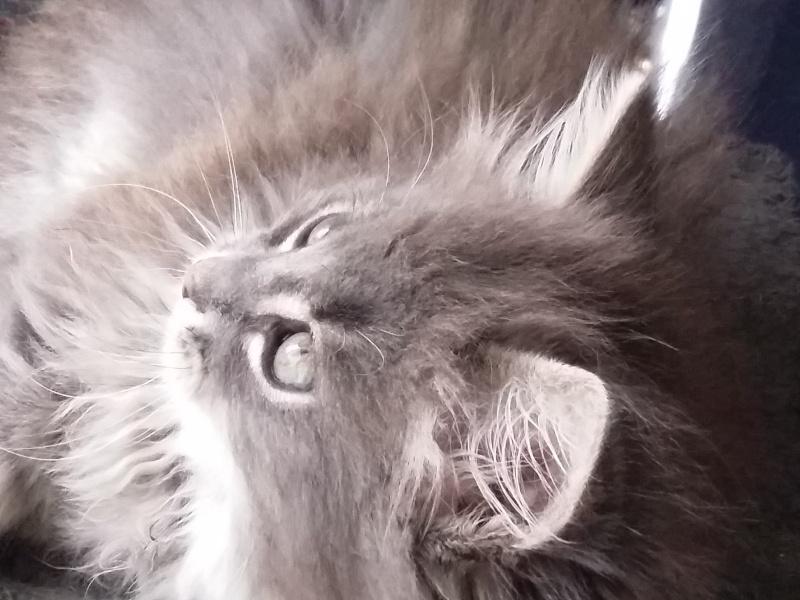 Lucky, mâle type européen gris né 16 mars 2015 - Page 2 20150510