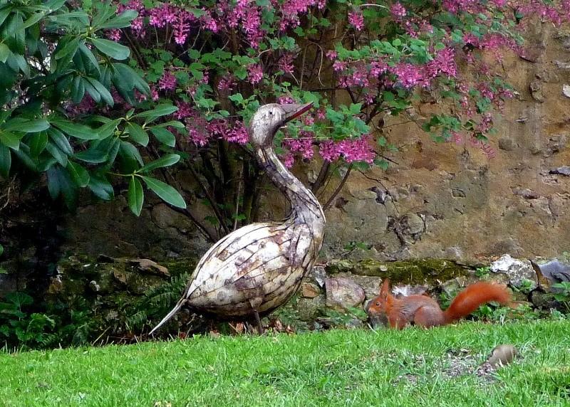 Nutsy ce matin dans notre jardin P1150614
