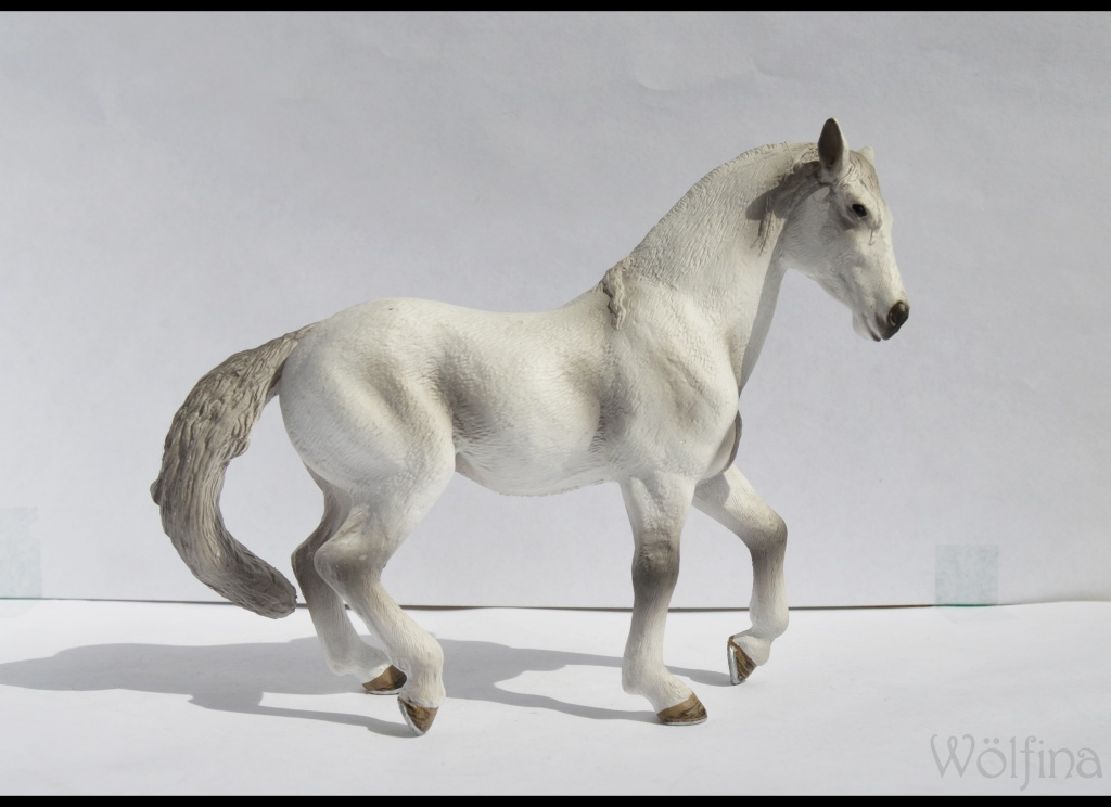 Walkaround of the 2012 Mojö Andalusian Stallions and comparison with Schleich Andalusian Dsc_0095