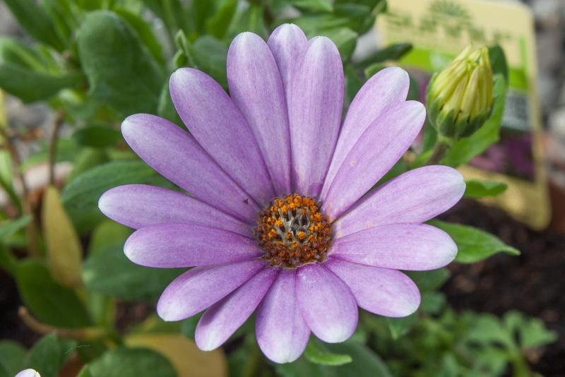 Fleurs ... tout simplement - Page 6 07062010