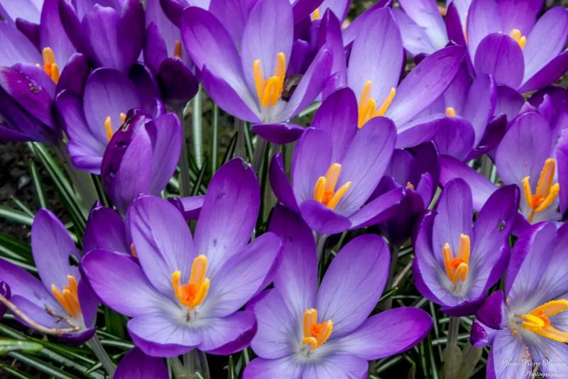 Fleurs ... tout simplement - Page 5 Fleurs10