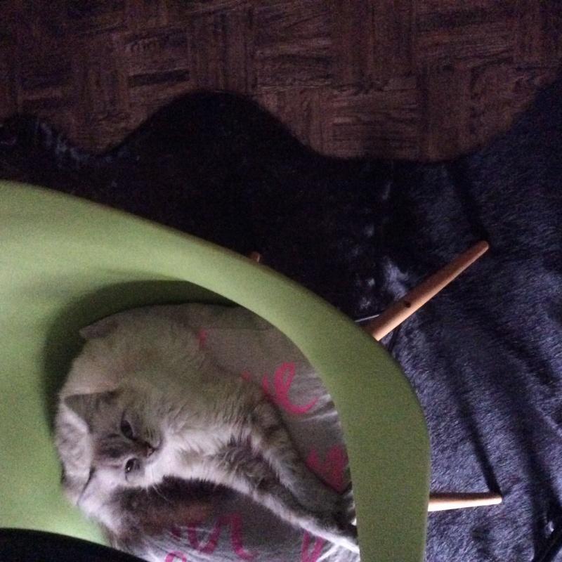 LOTUS (Stella) et LILOU (Joy) - Page 6 Image38