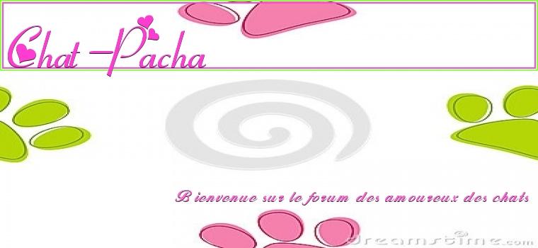 Chat-Pacha