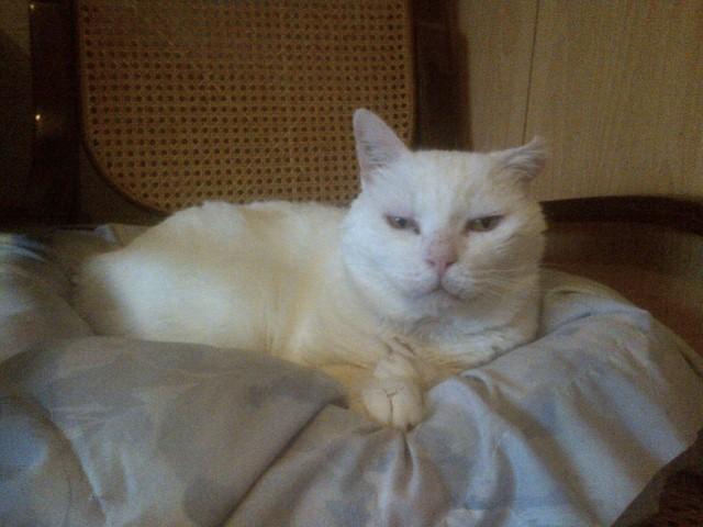 LULLY papi blanc Img-2039