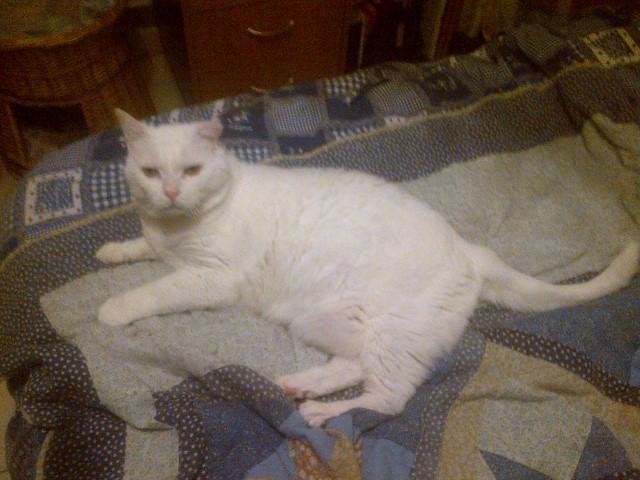 LULLY papi blanc Img-2042