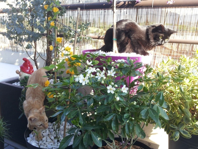 HELIO (Whiskas) et NEL (Giddy) - Page 4 20150420