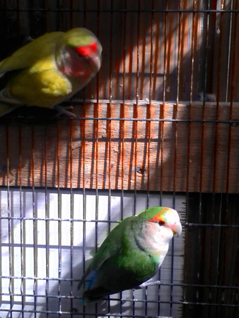 un copain pour sully Oiseau14
