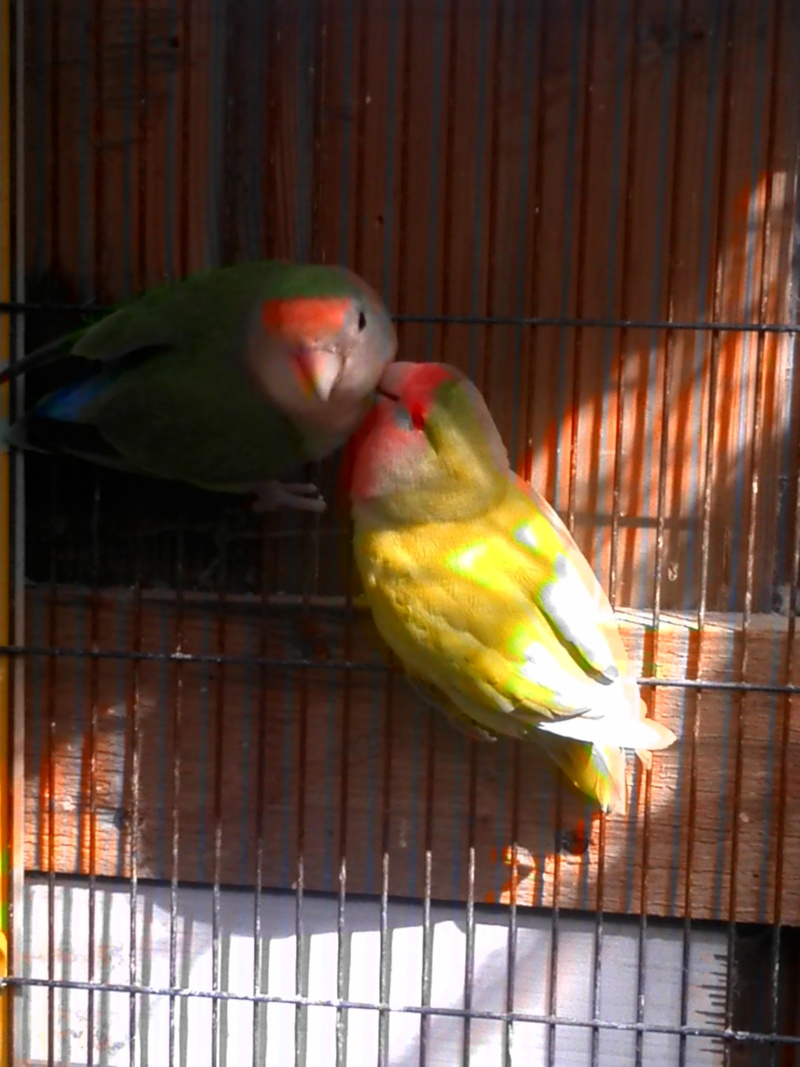 un copain pour sully Oiseau15